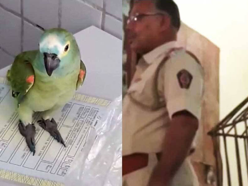 Lookout Parrot Trained By Drug Dealers - Ain't No Snitch